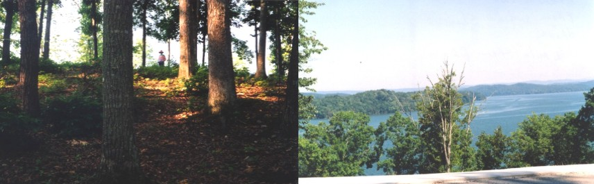 Beautiful Hardwoods, many very mature; View from Indian Shadows Drive - 1/2 a mile from property.